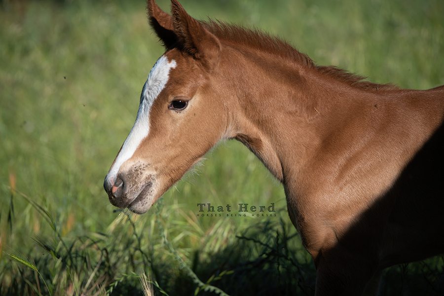 free range horse photography of an inquisitive new filly