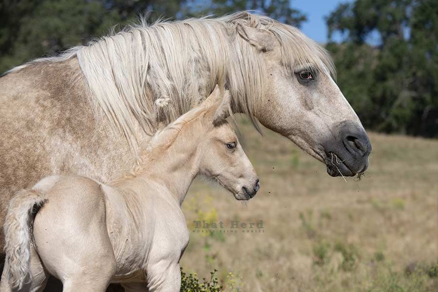 free range horse photography of a mare's warning to stay away from her colt