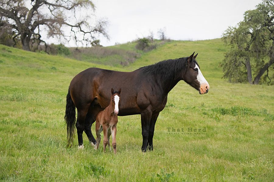 free range horse photography of a first-time mother and newborn foal