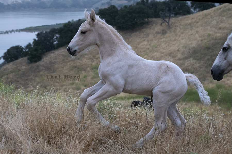 free range horse photography of an eight day old colt on a scenic hilltop