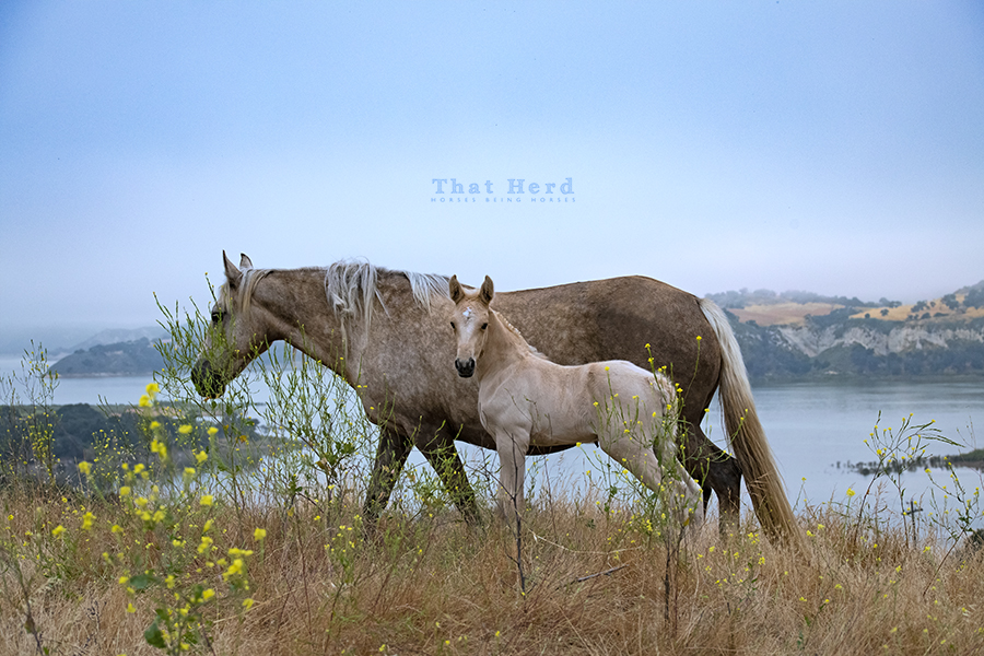free range horse photography of a mare and new foal on a scenic hilltop