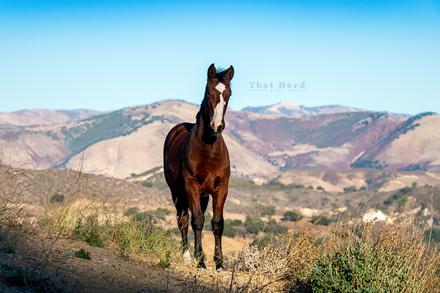 free range horse photography of a weanling filly with scenery