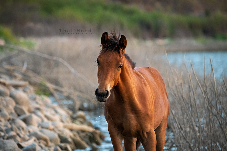 free range horse photography of a special colt at shoreline