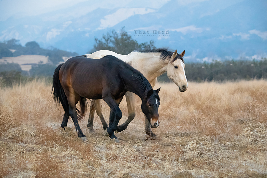 free range horse photography of two young colts in scenery