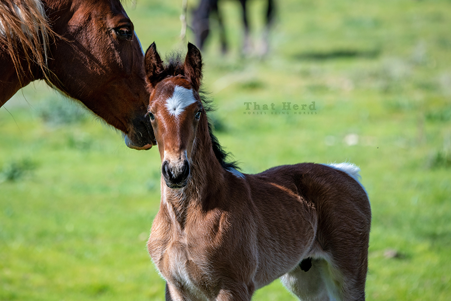 free range horse photography of a new spring colt