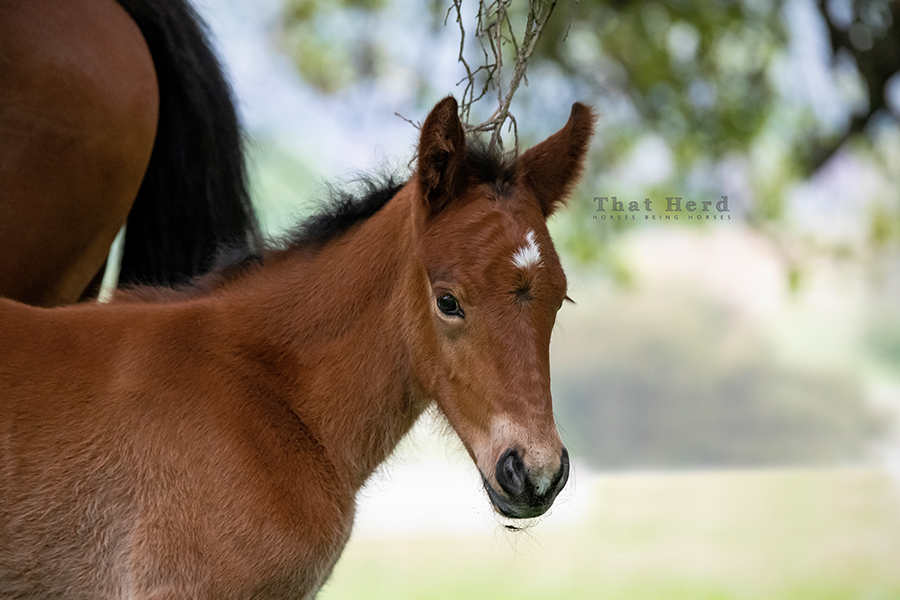 free range horse photography of a beautiful new foal