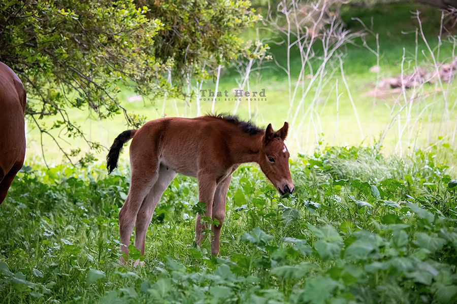 free range horse photography of a new filly experimenting with the flora