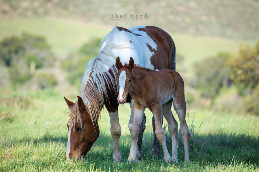 free range horse photography of an impressively developed newborn
