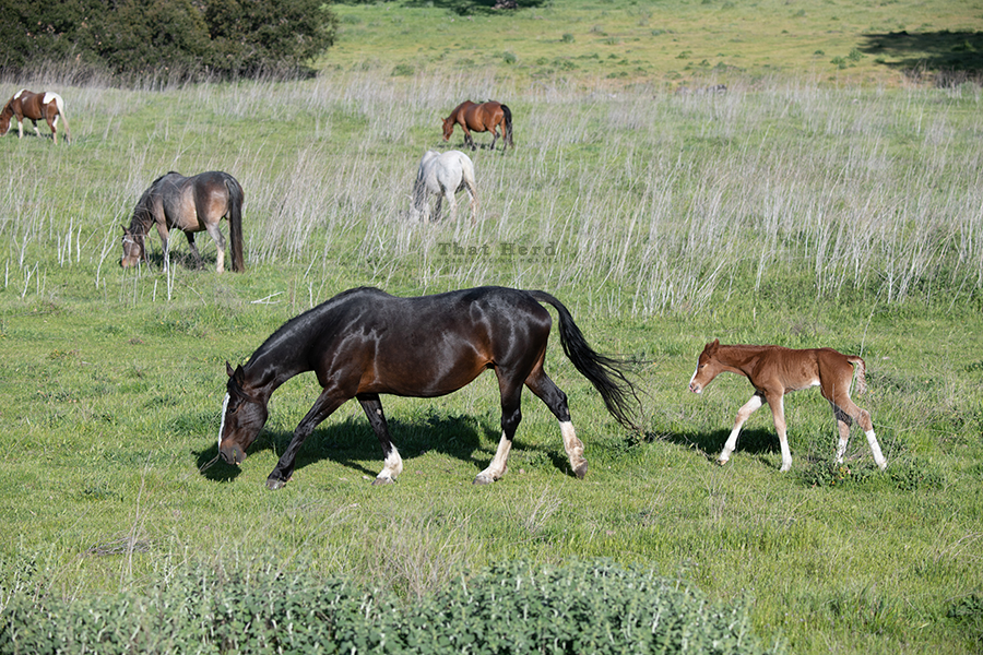 free range horse photography parade of a mare and her newborn foal