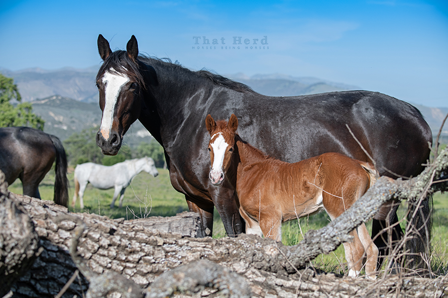 free range horse photography of a proud mother and her foal