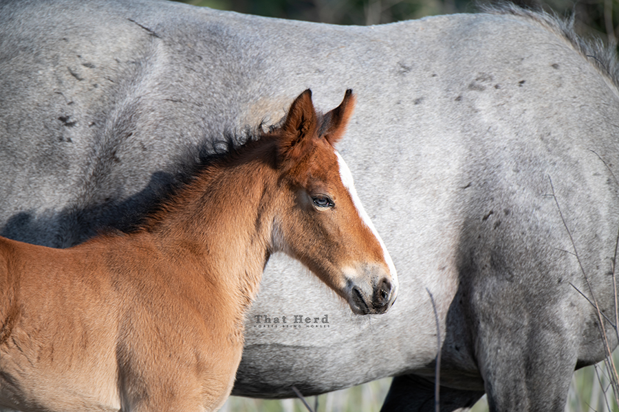 free range horse photography of a foal with grey eyes