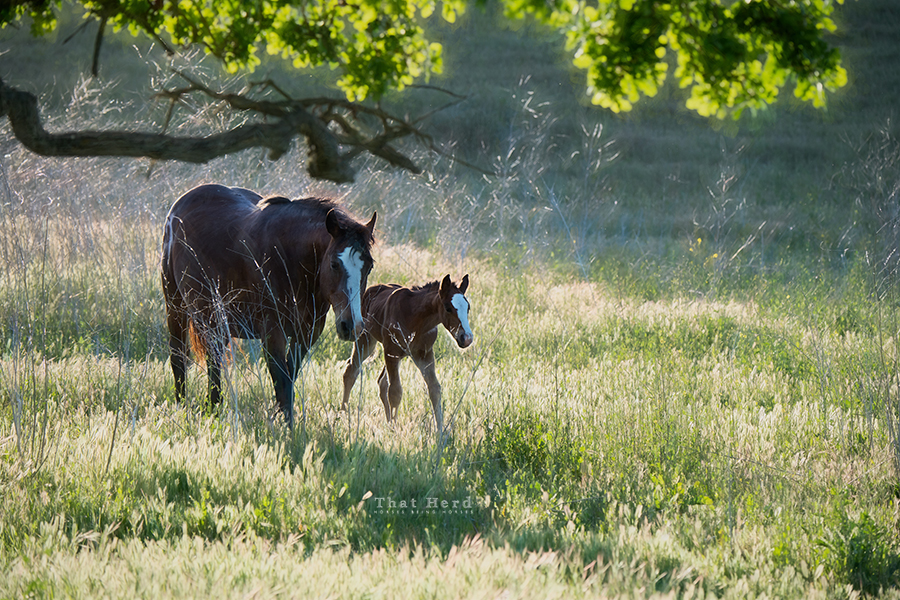 free range horse photography of a lovely moment with mare and foal