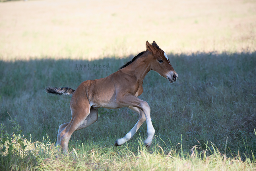 free range horse photography of a newborn who hit the ground running