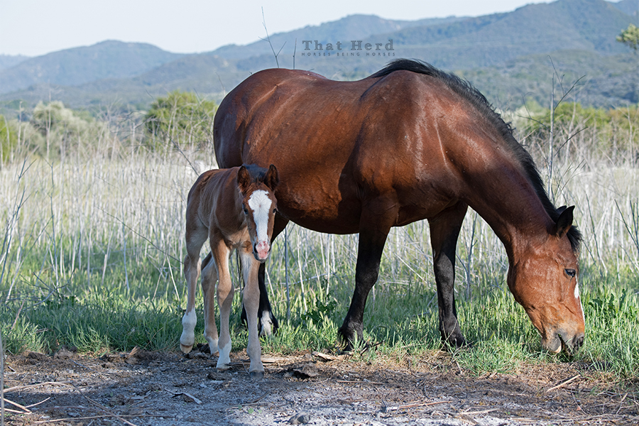 free range horse photography of an intrepid newborn filly