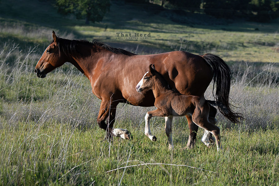 free range horse photography of a proud mare and newborn filly