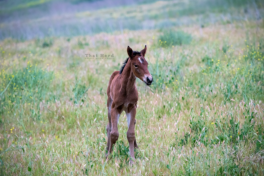 free range horse photography of a new horse soul