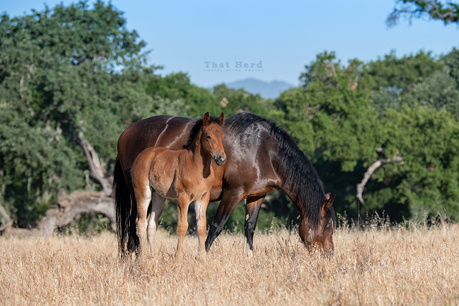 free range horse photography of a colt showing lots of growth at six weeks