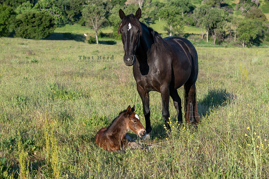 free range horse photography of a new filly and her serene mother