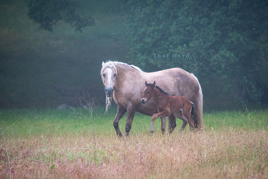 free range horse photography of a mare warning others to stay away from her new colt