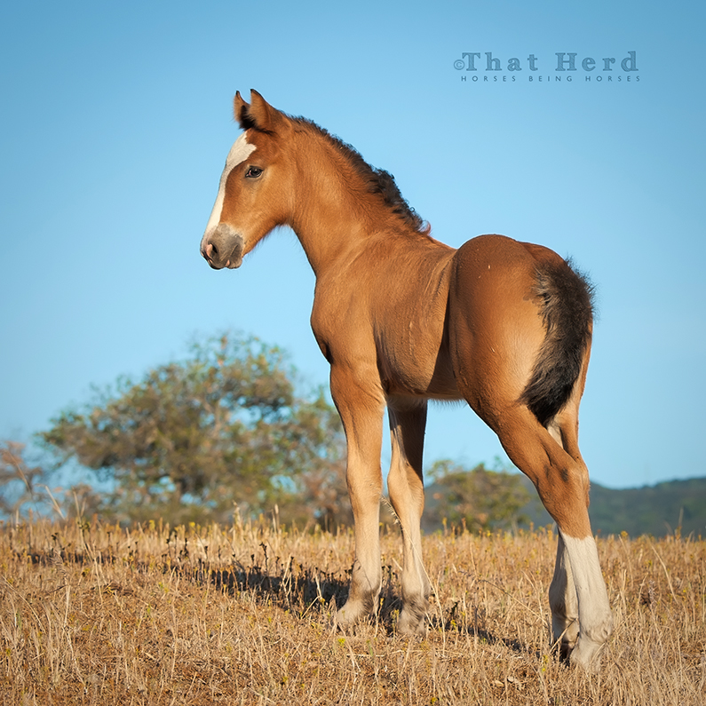 free range horse photography of a striking filly