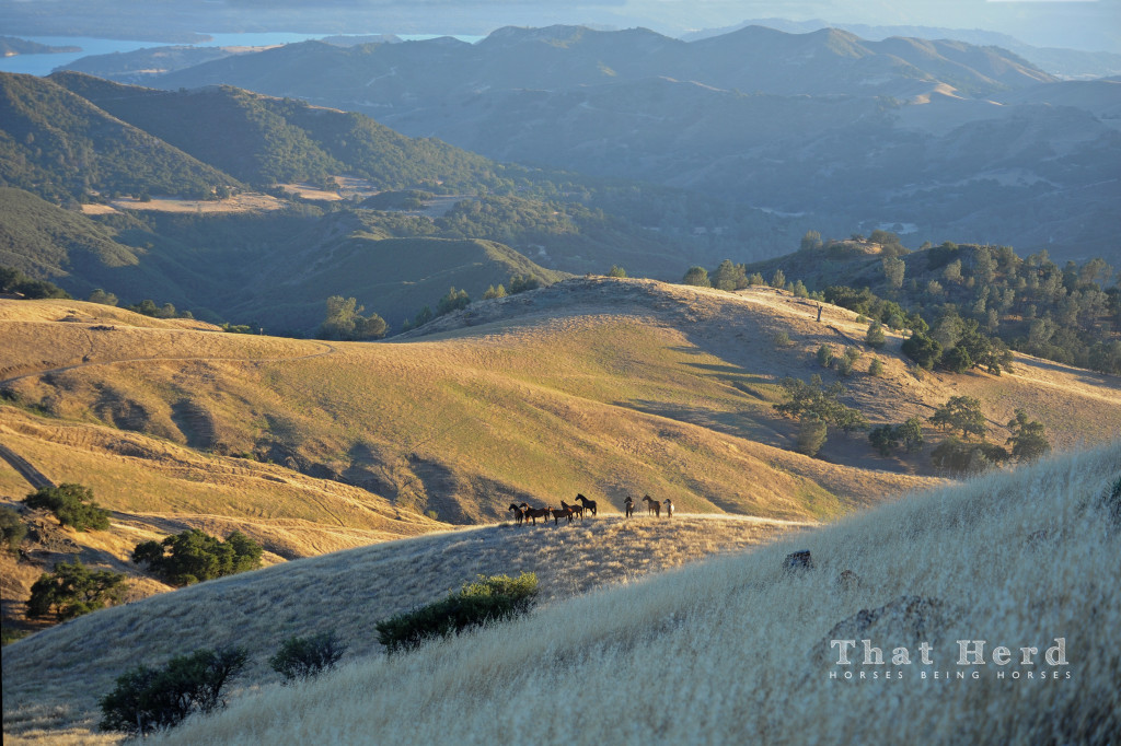 photography of a band of wild horses in a scenic mountain landscape