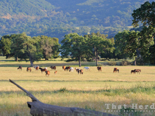 wild mares and foals in a lovely late spring meadow