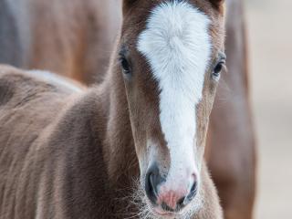 wild newborn foal born