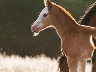 Newborn wild horse foal