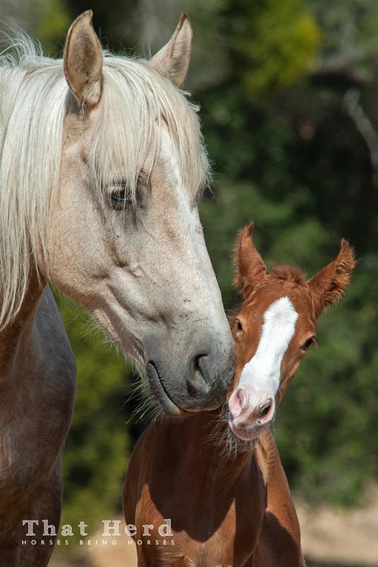 wild horse photography of a newborn colt