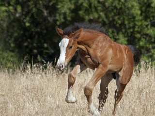 wild horse photography of a leaping foal