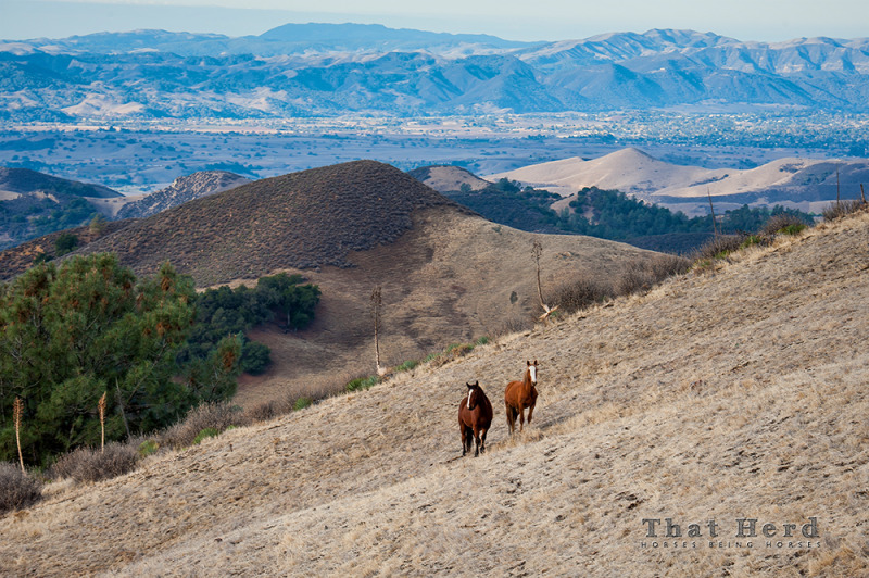 wild horse photography of two horses on a hillside landscape
