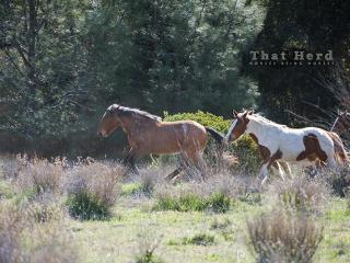 wild horse photography of horses running through woods