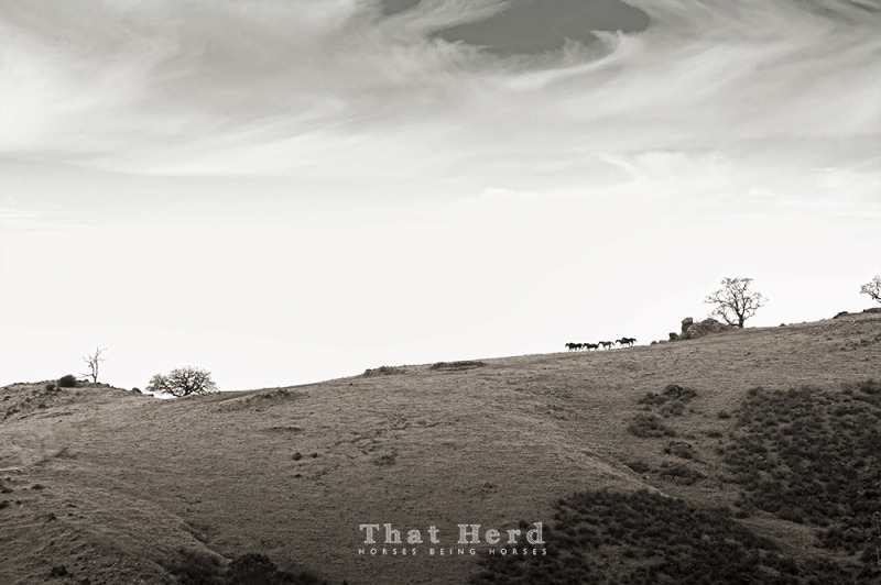 wild horse photography landscape of a band of horses traveling across a hilltop