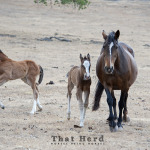 wild horse photography of a mare and foal leaving an annoying foal behind