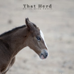 wild horse photography of an annoyed foal