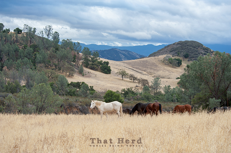 wild horse photography of horses in beautiful landscape