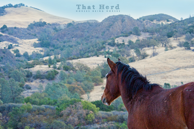 wild horse photography of a colt surveying the countryside