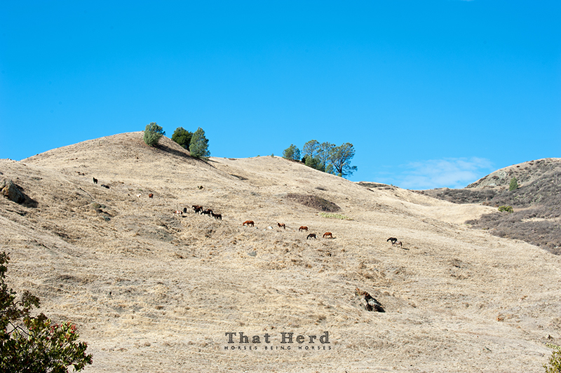 wild horse photography of horses grazing on a hillside