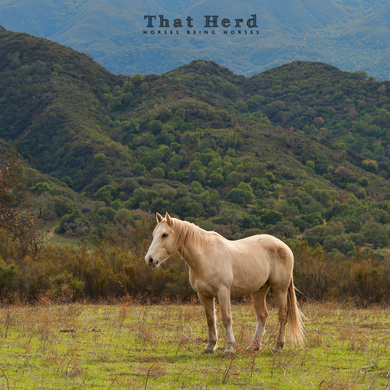 wild horse photography of a strong horse standing in contrast to his layered terrain