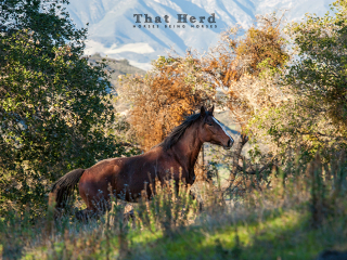 wild horse photography of a young horse running through the woods