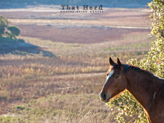 wild horse photography portrait of a horse framed by a scenic vista