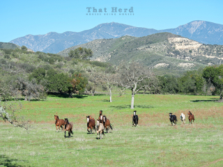 wild horse photography of several horses running through a mountain meadow