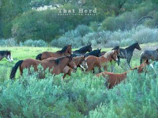 wild horse photography of young horses moving through springtime sagebrush