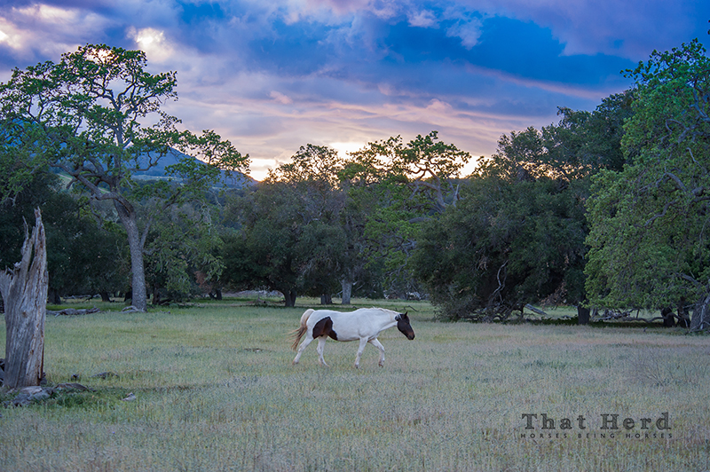 wild horse photography of a mare under a dramatic sky