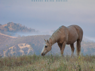 wild horse photography of a horse grazing on a mountain top