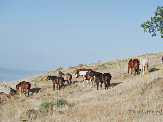 wild horse photography of several horses crossing a mountain side location