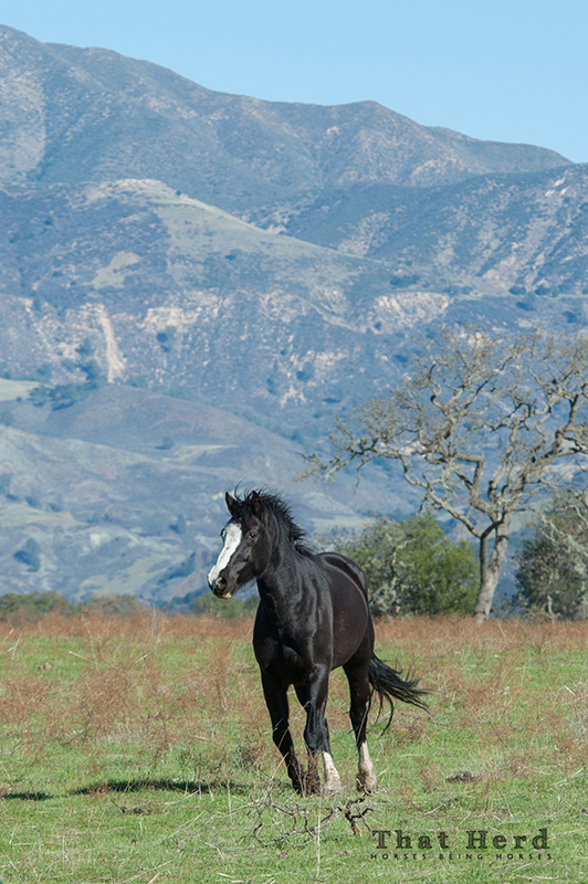 wild horse photography of a big horse is beautiful country