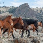 A Parade of Yearlings