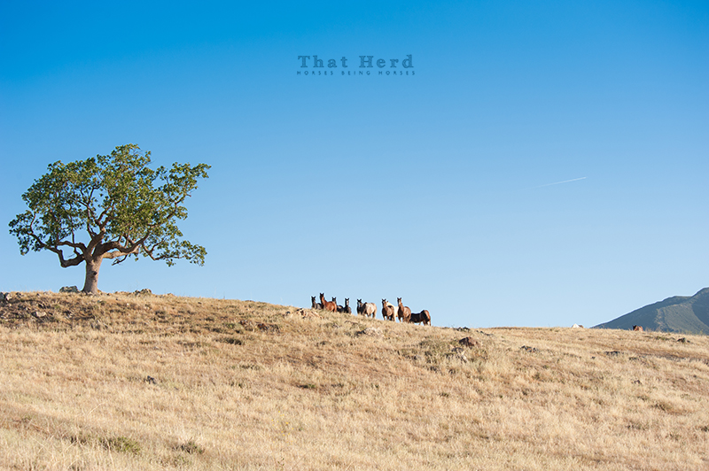 wild horse photography of distant horses on a hilltop