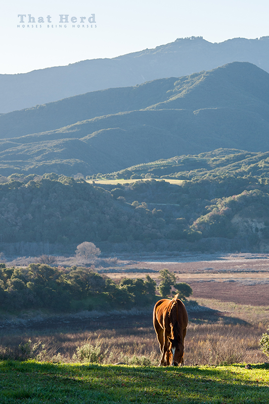 wild horse photography of a lovely view behind a grazing filly